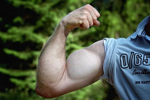 Fully developed biceps